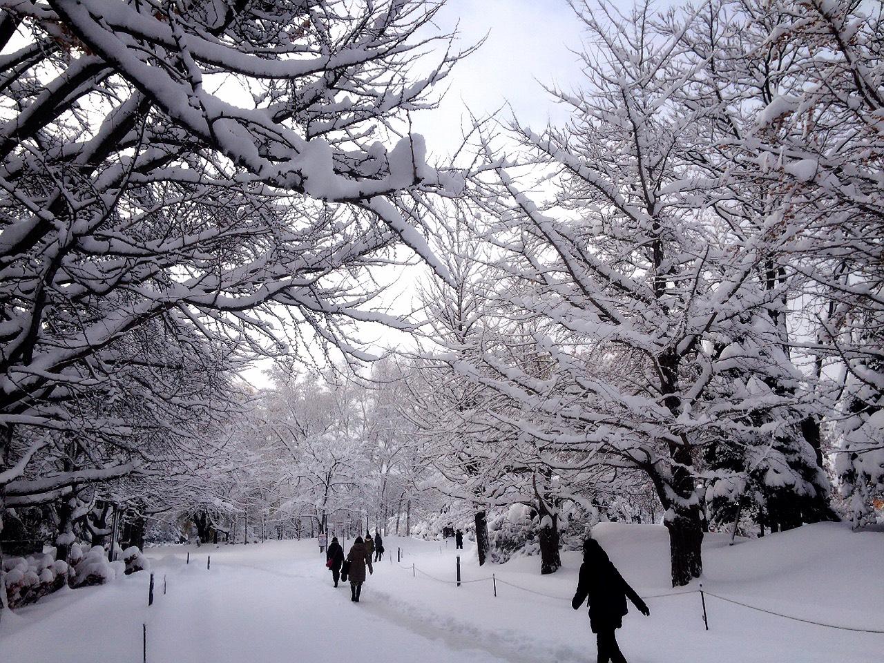 札幌は2日前の24日からすっかり雪景色!