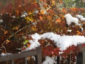 中島公園 雪