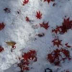11/6 札幌 11月としては記録的な大雪を記録